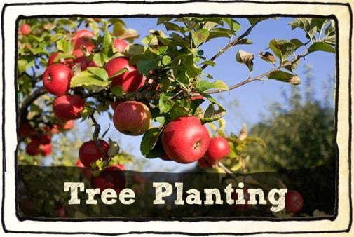 tree-planting-tab-min